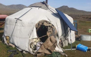 Bear attack in Mongolia – Fatalities!