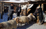Nationwide livestock census starts in Mongolia