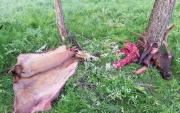 Mongolian man arrested for killing endangered deer