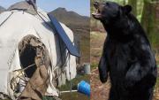 Bears Beware! UB warns public