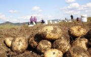 Good results for Mongolian vegetable growers