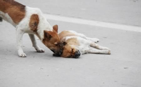 Хүний мөс, нохойн яс мууджээ