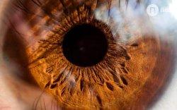 Нүдний өнгө давтагдашгүй