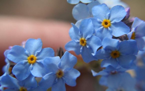 Quiz: Монголд ургадаг цэцгийг та хараад мэдэх үү?