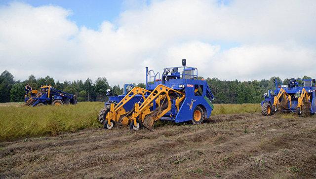 Смоленск муж олсны ургамлын тариалалтаа нэмэгдүүлнэ