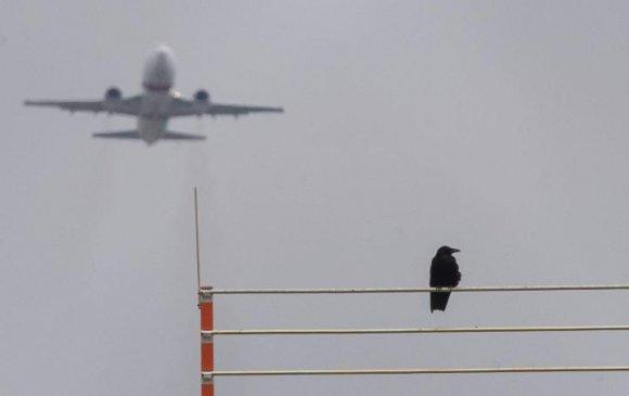 Шувуунаас хамгаалах шинэ арга