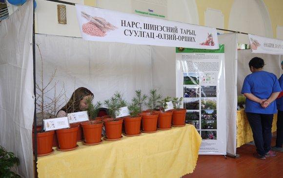 Хүнсний ногоо, жимс жимсгэнэ, цэцэг, модлог ургамлын үзэсгэлэн худалдаа нээгдлээ