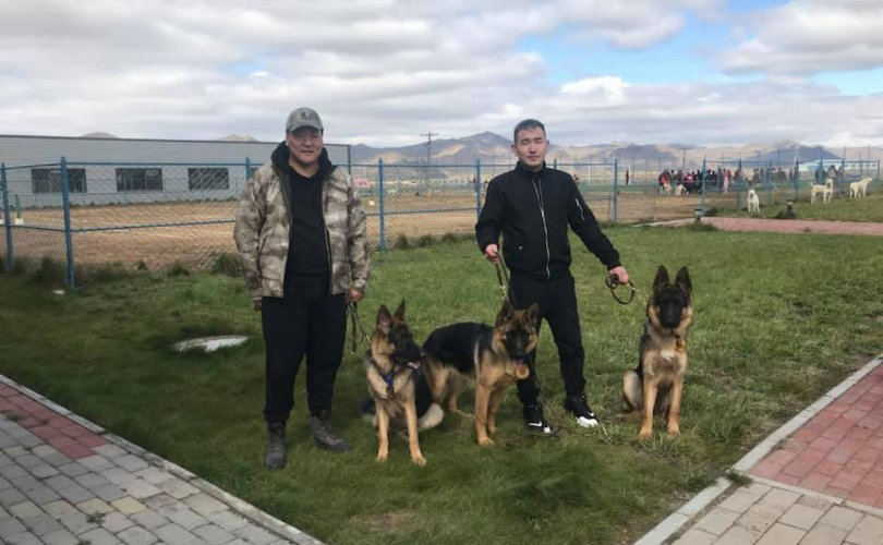 Нохойн аварга шалгаруулах тэмцээн болж байна