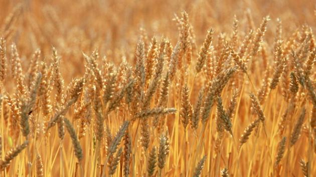 Ургац хураалтын ажил хойшилж болзошгүй