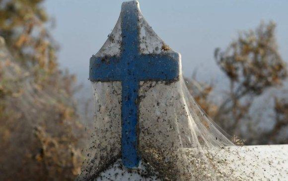 Аалзны шүлс Грекийн нуурыг бүрхлээ