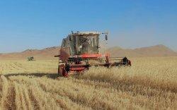 Улсын хэмжээнд ургац хураалт 85,1 хувьтай явж байна