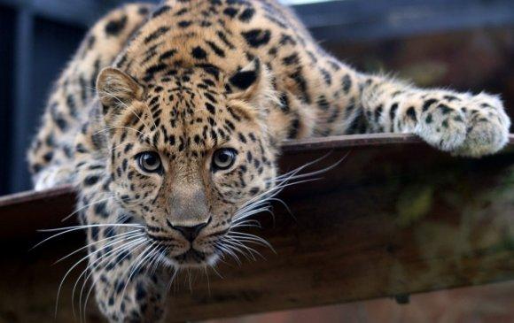 Хүн төрөлхтний буруутай үйлдлээс болж зэрлэг ан амьтдын тоо 60 хувиар буурчээ