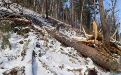 Богдхан уулын дархан цаазат газрын хамгаалалтын захиргаанаас мэдэгдэл гаргажээ