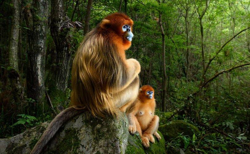 Хоёр сармагчны зураг шилдгээр шалгарав