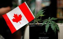 Канад улс марихуаны хомсдолд орж байна