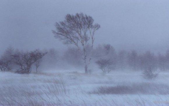 Маргаашнаас цас орж, цасан шуурга шуурна