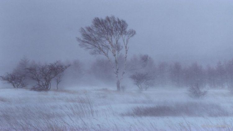 Ихэнх нутгаар цас орж, шуурна