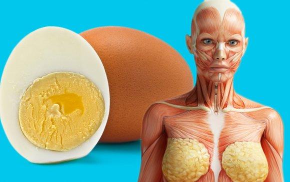 Өдөрт нэг өндөг идвэл зүрх судасны өвчнөөс сэргийлж чадна