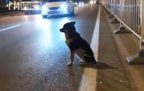 Талийгаач эзнээ 80 хоног хүлээж буй  нохой