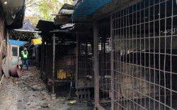 Өмнөд Солонгос нохой нядалгааны газрыг хаалаа