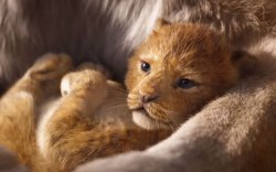 """""""Араатны хаан арслан"""" кино нээлтээ хийнэ"""