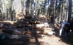 """""""Богдхан ууланд хууль бусаар мод бэлтгээгүй ой цэвэрлэх ажиллагаа хийж байна"""""""