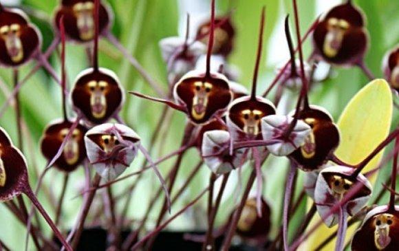 Дэлхийн хамгийн хачирхалтай цэцгүүд