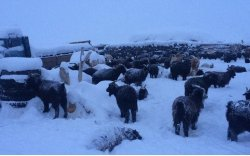 Монгол оронд зуд болох эрсдэл нүүрлэжээ