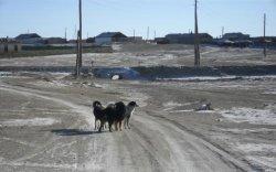 Улаанбаатар 360 мянган нохойтой