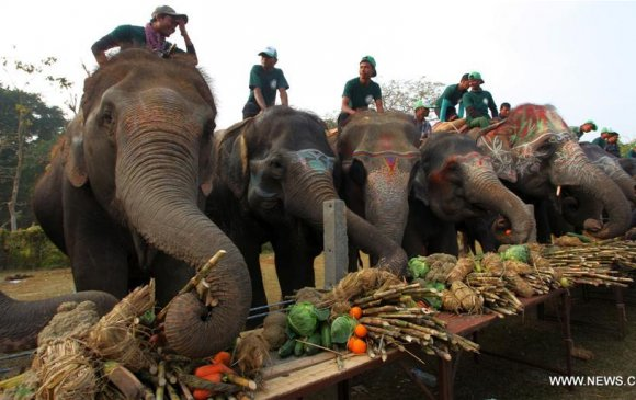 Балбад зааны фестиваль болж байна