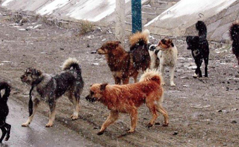 Богдхан ууланд зэрлэгшсэн нохойн устгал явагдаж дууслаа