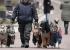 Нохой салхилуулах үйлчилгээг Орост анх удаа нэвтрүүлжээ