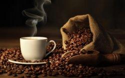 Кофены ургамалд устах аюул нүүрлэжээ