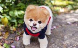 Дэлхийн хамгийн өхөөрдөм нохой нас баржээ