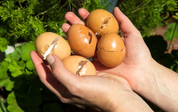 Өндөгний хальсыг хаяхгүй байх таван шалтгаан