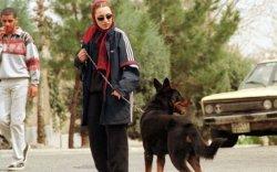 Тегеранд олон нийтийн газар нохойтой явахыг хоригложээ