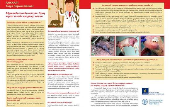 Африкийн гахайн мялзан буюу зэрлэг гахайн халварт өвчин, илрэх шинж тэмдэг