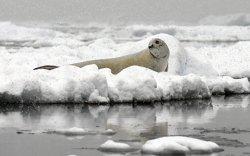 Антарктид руу далбаат онгоцоор аялахаар төлөвлөж байна