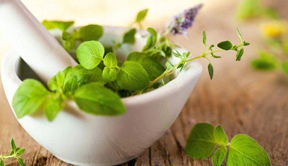 Таны эрүүл мэндэд тустай ургамлууд