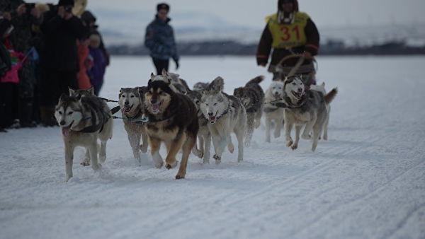 Нохой чарганы уралдааны шагналын сан 11 сая рубльд хүрчээ
