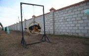 Нохойн хөтөч, эрэлч нохой бэлтгэх сургалт эхэллээ