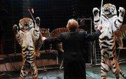 ОХУ-ын Соёлын яам цирк болон зоопаркийн амьтадтай харьцах журам гаргалаа