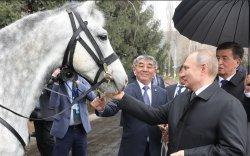 ФОТО: Путинд хатирч морь, тайгын нохой бэлэглэжээ