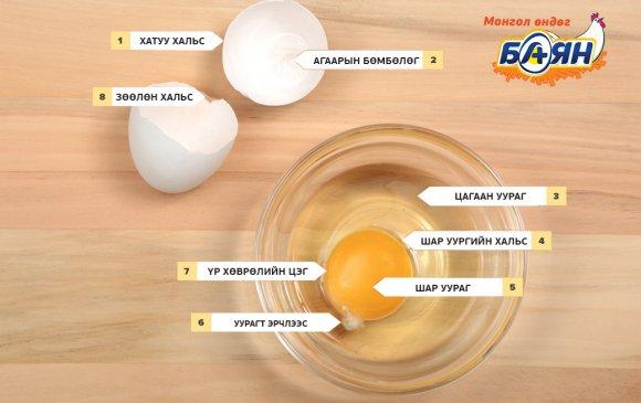 Та хэзээ нэгэн цагт өндөгний бүтцийг нарийвчлан сонирхож байсан уу?