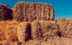 Хаваржилт хүндэрсэн сумын малчдад 900 тонн өвс үнэгүй өгнө