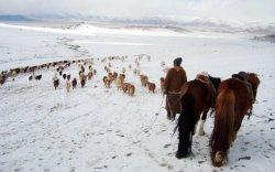 Говь-Алтай аймгийн таван суманд хаваржилт хүндэрчээ