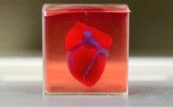 Дэлхийд анх удаа 3D-гээр амьд зүрх хэвлэв