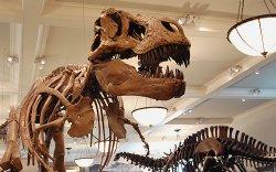 """""""Тиранозавр Батаарын толгойноос гадна палеонтологийн олон тооны олдвор хулгайд алдагдсан"""""""