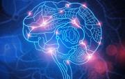 Монгол хүний уураг тархины онцлогт тулгуурлан судалгаа хийнэ