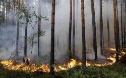 Улсын хэмжээнд 300 мянган га талбай түймэрт өртжээ